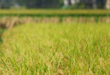 【写真】 田園風景